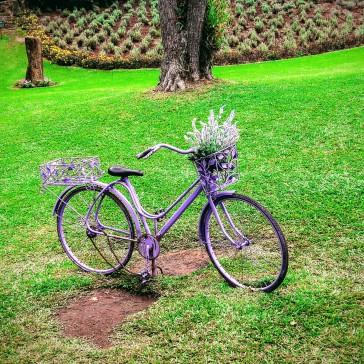 Le Jardin - Gramado